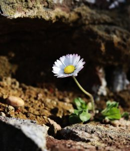 daisy, freedom, nature